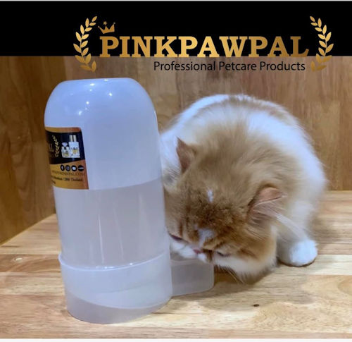 Persian cat drinking from pet waterer